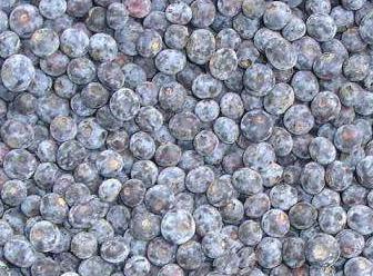 long8国际官方网站蓝莓